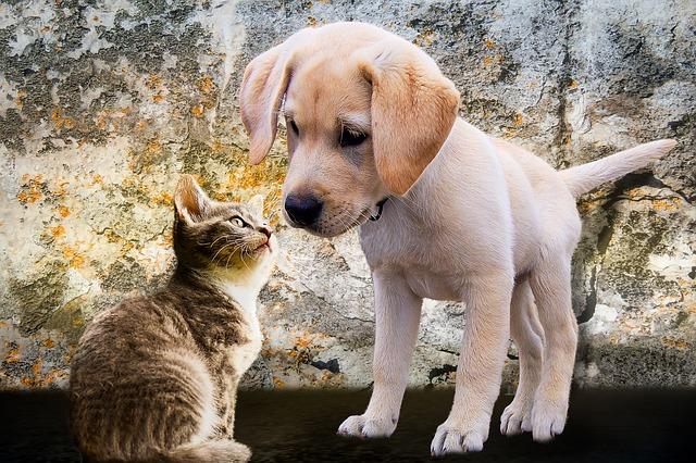 štěně s kočičkou
