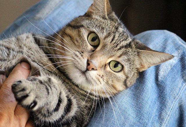 kočka na klíně