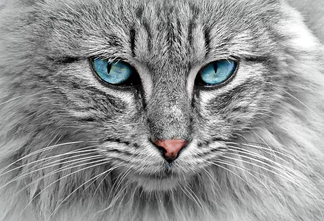 Detail na kočičí oči