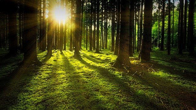 Město lesů a studánek